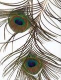 Fondo de la pluma del pavo real Fotografía de archivo libre de regalías