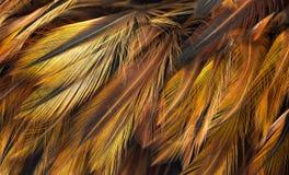 Fondo de la pluma de pájaro imagenes de archivo