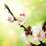 Fondo de la primavera Imágenes de archivo libres de regalías