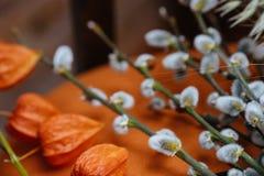 Fondo de la primavera con el gatito-sauce hermoso de la primavera con el Ca Foto de archivo libre de regalías