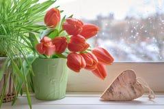 Fondo de la primavera con la hierba verde, manojo de tulipanes anaranjados y w Imagen de archivo