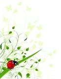 Fondo de la primavera con la mariquita Imágenes de archivo libres de regalías