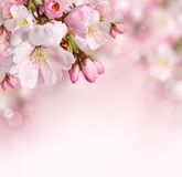 Fondo de la primavera con las flores rosadas fotos de archivo libres de regalías