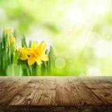 Fondo de la primavera con las flores y la tabla de madera Imagenes de archivo