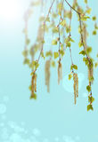 Fondo de la primavera con las hojas verdes claras de Foto de archivo