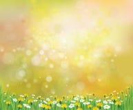 Fondo de la primavera de la naturaleza del vector con las manzanillas Imagen de archivo libre de regalías