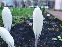 Fondo de la primavera de las plantas de las flores con las hojas fotografía de archivo libre de regalías