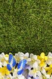 Fondo de la primavera o de la frontera del verano Imagen de archivo libre de regalías
