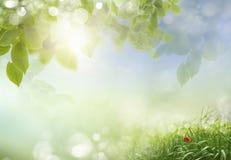 Fondo de la primavera o de la naturaleza del extracto de la estación de verano fotos de archivo