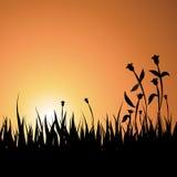 Fondo de la puesta del sol del verano con la hierba y las flores Imagenes de archivo