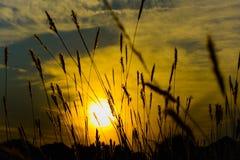 Fondo de la puesta del sol que destaca las cuchillas de la hierba Fotografía de archivo libre de regalías