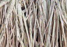 Fondo de la raíz del árbol Foto de archivo libre de regalías