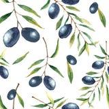 Fondo de la rama de olivo de la acuarela Imagen de archivo