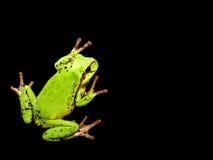Fondo de la rana verde Imágenes de archivo libres de regalías