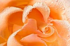 Fondo de la rosa del amarillo fotografía de archivo