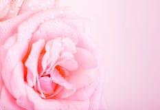 Fondo de la rosa del rosa Fotografía de archivo libre de regalías