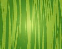 Fondo de la selva libre illustration