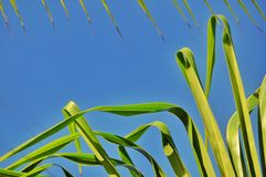 Fondo de la selva de hojas de palma Foto de archivo