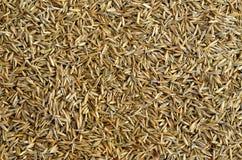 Fondo de la semilla de la hierba Foto de archivo