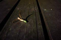Fondo de la semilla de la vuelta Foto de archivo