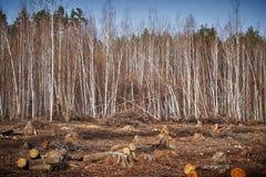 Fondo de la tala de árboles Imagen de archivo libre de regalías