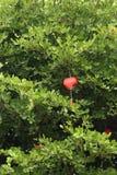 Fondo de la tarjeta de felicitación de la naturaleza - decoraciones rojas del corazón Fotografía de archivo libre de regalías