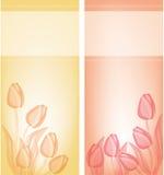 Fondo de la tarjeta de los tulipanes Foto de archivo libre de regalías
