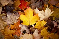 Fondo de la temporada de otoño Imagen de archivo