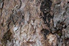 Fondo de la textura de la corteza de árbol de Brown Fotos de archivo