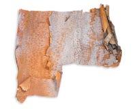 Fondo de la textura de la corteza de árbol de abedul Imagen de archivo libre de regalías