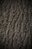 Fondo de la textura de la corteza de árbol inconsútil tileable Fotografía de archivo