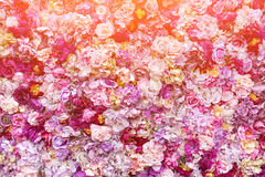Fondo de la textura de la flor para casarse escena Rosas, peonías y hortensias, flores artificiales en la pared fotografía de archivo