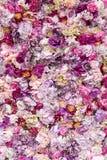 Fondo de la textura de la flor para casarse escena Rosas, peonías y hortensias, flores artificiales en la pared imagenes de archivo