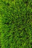 Fondo de la textura de la hierba verde Imágenes de archivo libres de regalías