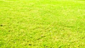 Fondo de la textura de la hierba verde de la perspectiva, fondo natural Foto de archivo libre de regalías