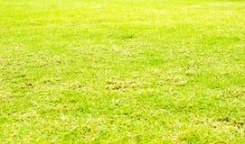 Fondo de la textura de la hierba verde de la perspectiva, fondo natural Fotos de archivo