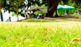Fondo de la textura de la hierba verde de la perspectiva, fondo natural Imágenes de archivo libres de regalías