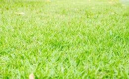 Fondo de la textura de la hierba verde de la perspectiva, fondo natural Imagenes de archivo