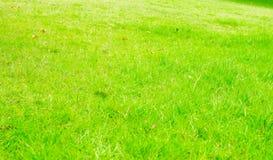 Fondo de la textura de la hierba verde de la perspectiva, fondo natural Fotos de archivo libres de regalías
