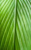 Fondo de la textura de la hoja Imagen de archivo