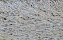 Fondo de la textura de la lufa Imagenes de archivo