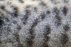 Fondo de la textura de la piel del gato imagenes de archivo