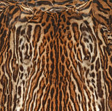 Fondo de la textura de la piel del leopardo Fotos de archivo libres de regalías