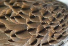 Fondo de la textura de la pluma del ala del pájaro imagen de archivo