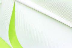 Fondo de la textura de la pluma del cisne Foto de archivo libre de regalías