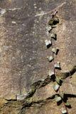 Fondo de la textura de la roca y de la hiedra Fotografía de archivo