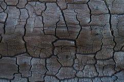 Fondo de la textura de madera quemada Foto de archivo