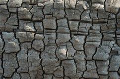 Fondo de la textura de madera quemada Fotos de archivo