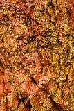 Fondo de la textura de piedra mojada anaranjada de la pared de la roca al aire libre Foto de archivo
