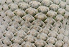 Fondo de la textura del cactus Imagenes de archivo